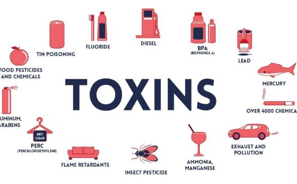 How synthetic chemicals and toxins effect your health